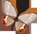 бабочка, насекомые, фауна, butterfly, insects, schmetterling, insekten, papillon, insectes, faune, mariposa, insectos, farfalla, insetti, borboleta, insetos, fauna, метелик, комахи