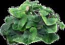 зеленые лопухи, куст лопуха, лопух, листья лопуха, репейник, зеленый лист, green burdocks, burdock bush, burdock leaves, burdock, green leaf, grün klette busch klette, klette blätter, klette, grünes blatt, bardane vert bardane brousse, feuilles de bardane, bardane, feuille verte, bardana bardana verde arbusto, hojas de bardana, la bardana, la hoja verde, bardana verde bardana cespuglio, foglie di bardana, foglia verde, bardana arbusto verde bardana, folhas de bardana, bardana, folha verde