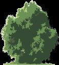 флора, лиственное дерево, зеленое растение, deciduous tree, green plant, laubbaum, grünpflanze, flore, arbre à feuilles caduques, plantes vertes, árbol de hoja caduca, las plantas verdes, albero a foglie decidue, pianta verde, flora, árvore de folha caduca, planta verde, листяне дерево, зелена рослина, дерево