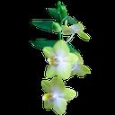 цветок орхидеи, цветущая орхидея, orchid flower, blooming orchid, orchideenblüte, orchidee blüte, orchidée, fleur, orchidée fleur, flor de la orquídea, orquídeas florecen, fiore di orchidea, fiore orchidea, flor da orquídea