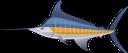 рыба меч, голубой марлин, атлантический марлин, синий марлин, морская рыба, рыбы, морепродукты, fish sword, atlantic marlin, saltwater fish, fish, seafood, fischschwert, atlantischer marlin, blue marlin, salzwasserfisch, fisch, meeresfrüchte, épée de poisson, makaire atlantique, makaire bleu, poisson de mer, poisson, fruits de mer, espada de pescado, marlin atlántico, marlin azul, pescado de agua salada, pescado, mariscos, pesce spada, marlin atlantico, marlin blu, pesce d'acqua salata, pesce, frutti di mare, espada de peixe, espadim atlântico, espadim azul, peixe do mar, peixe, frutos do mar, риба меч, блакитний марлин, атлантичний марлин, синій марлин, морська риба, риби, морепродукти