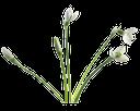 цветы подснежники, белые цветы, подснежник, весна, flowers snowdrops, white flowers, spring, schneeglöckchen blumen, weiße blüten, schneeglöckchen, frühlings, perce-neige fleurs, fleurs blanches, ressort, campanillas flores, flores blancas, campanilla de invierno, bucaneve fiori, fiori bianchi, bucaneve, snowdrops flores, flores brancas, snowdrop, primavera