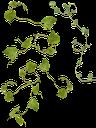 листья, зеленый лист, зеленое растение, плющ, вьющееся растение, leaves, green leaf, green plant, ivy, climbing plant, blätter, grünes blatt, grüne pflanze, efeu, kletterpflanze, feuilles, feuille verte, plante verte, lierre, plante grimpante, hojas, hoja verde, hiedra, planta trepadora, foglie, foglia verde, pianta verde, edera, pianta rampicante, folhas, folha verde, planta verde, hera, planta de escalada, листя, зелений лист, зелена рослина, витка рослина