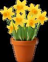 цветок нарцисса, желтый цветок, нарцисс, букет цветов, цветы, флора, желтый, flower narcissus, yellow flower, narcissus, flowerpot, bouquet of flowers, flowers, yellow, blume narzisse, gelbe blume, narzisse, blumentopf, blumenstrauß, blumen, gelb, fleur narcisse, fleur jaune, narcisse, pot de fleurs, bouquet de fleurs, fleurs, flore, jaune, flor narciso, flor amarilla, maceta, ramo de flores, amarillo, fiore narciso, fiore giallo, vaso di fiori, mazzo di fiori, fiori, giallo, narciso de flores, flor amarela, narciso, vaso de flores, buquê de flores, flores, flora, amarelo, квітка нарциса, жовта квітка, нарцис, вазон, букет квітів, квіти, жовтий