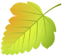 желтый лист, осенняя листва, осень, yellow leaf, autumn foliage, autumn, gelbes blatt, herbstlaub, herbst, feuille jaune, feuillage d'automne, automne, hoja amarilla, follaje de otoño, otoño, foglia gialla, fogliame autunnale, autunno, folha amarela, outono folha, outono, жовтий лист, осіннє листя, осінь