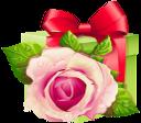 красная роза, подарочная коробка, поздравление, подарок, цветы, gift box, congratulation, gift, flowers, geschenk-box, gruß, geschenk, blumen, rose rouge, boîte cadeau, salutation, cadeau, fleurs, rose roja, caja de regalo, saludo, red rose, scatola regalo, saluto, regalo, fiori, rose vermelho, caixa de presente, saudação, presente, flores, червона троянда, подарункова коробка, привітання, подарунок, квіти