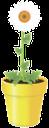 вазон, цветочный горшок, цветок ромашка, blumentopf, blume daisy, vase, pot de fleur, fleur de marguerite, florero, maceta, flor de la margarita, vaso di fiori, fiore della margherita, vaso, vaso de flores, flor da margarida