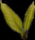 зеленый лист, зеленое растение, green leaf, green plant, grünes blatt, grüne pflanze, feuille verte, plante verte, hoja verde, foglia verde, pianta verde, folha verde, planta verde, зелений лист, зелена рослина