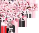 сакура, японская вишня, розовый цветок, ветка сакуры, дерево сакуры, зеленое растение, весенние цветы, флора, japanese cherry, pink flower, sakura branch, sakura tree, green plant, spring flowers, japanische kirsche, rosa blume, sakura-zweig, sakura-baum, grüne pflanze, frühlingsblumen, cerise japonaise, fleur rose, branche de sakura, arbre de sakura, plante verte, fleurs de printemps, flore, cereza japonesa, rama de sakura, árbol de sakura, flores de primavera, sakura, ciliegio giapponese, fiore rosa, ramo di sakura, albero di sakura, pianta verde, fiori primaverili, cerejeira japonesa, flor rosa, ramo de sakura, árvore de sakura, planta verde, flores da primavera, flora, японська вишня, рожева квітка, гілка сакури, дерево сакури, зелена рослина, весняні квіти