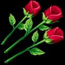 three, roses