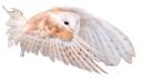 полярная сова, сова, филин, snowy owl, owl, eagle owl, schnee-eule, eule, uhu, harfang des neiges, hibou, aigle, búho blanco, búho, búho real, gufo delle nevi, civetta, gufo reale, coruja, águia, coruja nevado