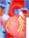 медицина, органы человека, анатомия, сердце, внутренности человека, кардиология, части тела, тело человека, medicine, human organs, anatomy, heart, human insides, cardiology, body parts, human body, medizin, menschliche organe, herz, innere organe, kardiologie, körperteile, menschlicher körper, médecine, organes humains, anatomie, coeur, intérieur humain, cardiologie, parties du corps, corps humain, órganos humanos, anatomía, corazón, cardiología, partes del cuerpo, cuerpo humano, organi umani, cuore, interno umano, parti del corpo, corpo umano, medicina, órgãos humanos, anatomia, coração, interior humano, cardiologia, partes do corpo, corpo humano, органи людини, анатомія, серце, нутрощі людини, кардіологія, частини тіла, тіло людини