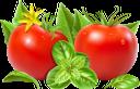 помидор, томаты, красный помидор, листья помидора, зеленый лист, овощи, продукты питания, зеленое растение, еда, красный, tomato, tomatoes, red tomato, tomato leaves, green leaf, vegetables, green plant, food, red, tomaten, rote tomate, tomatenblätter, grünes blatt, gemüse, grüne pflanze, lebensmittel, rot, tomate rouge, feuilles de tomate, feuille verte, légumes, plante verte, nourriture, rouge, tomates, tomate rojo, hojas de tomate, hoja verde, verduras, rojo, pomodoro, pomodori, pomodoro rosso, foglie di pomodoro, foglia verde, verdure, pianta verde, cibo, rosso, tomate, tomate vermelho, folhas de tomate, folha verde, vegetais, planta verde, comida, vermelho, помідор, томати, червоний помідор, листя помідора, зелений лист, овочі, продукти харчування, зелена рослина, їжа, червоний