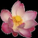 флора, цветы, распустившийся цветок, flowers, blown flower, blumen, geblasen blume, flore, fleurs, fleur soufflé, flor abierta, fiori, fiore soffiato, flora, flores, flor soprado