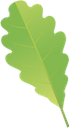 лист дуба, oak leaf, зеленый лист, зелений лист, лист дерева, green leaf, leaf of a tree, eichenblatt, grünes blatt, baumblatt, feuille de chêne, feuille verte, feuille d'arbre, hoja de roble, hoja verde, hoja del árbol, foglia di quercia, foglia verde, albero a foglia, folha do carvalho, folha verde, folha da árvore