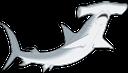 акула, морская рыба, акульи плавники, акула молот, shark, sea fish, shark fins, shark hammer, hai, seefisch, haifischflossen, hai hammer, requin, poissons de mer, ailerons de requin, marteau de requin, tiburón, pescado de mar, aletas de tiburón, tiburón martillo, squalo, pesce di mare, pinne di squalo, squalo martello, tubarão, peixe de água salgada, barbatanas de tubarão, martelo tubarão