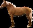 фауна, животные, парнокопытные, лошадь, конь, animals, cloven-hoofed, horse, tiere, paarhufig, pferd, faune, animaux, artiodactyles, cheval, animales, de pezuña hendida, caballo, animali, ungulati, cavallo, fauna, animais, biungulados de caça, cavalo