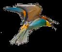 птица, летящая птица, bird, flying bird, vogel, fliegende vogel, oiseau, oiseau volant, pájaro, pájaro de vuelo, uccello, uccello che vola, pássaro, pássaro de vôo