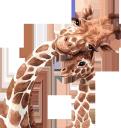 жираф, африканские животные, фауна, african animals, giraffe, afrikanische tiere, girafe, animaux africains, faune, jirafa, animales africanos, giraffa, animali africani, girafa, animais africanos, fauna, африканські тварини