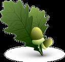 зеленый лист, желудь, oak leaf, green leaf, oak, acorn, eichenblatt, grünes blatt, eiche, eichel, feuille de chêne, feuille verte, chêne, gland, hoja de roble, hoja verde, roble, bellota, foglia di quercia, foglia verde, quercia, ghianda, folha do carvalho, folha verde, carvalho, bolota, лист дуба, зелений лист, дуб, жолудь