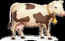 корова, домашние животные, парнокопытные, cow, pets, artiodactyls, kuh, haustiere, paarhufer, vache, animaux domestiques, artiodactyles, mascotas, mucca, animali domestici, artiodattili, vaca, animais de estimação, artiodáctilos, домашні тварини, парнокопитні