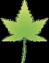 лист клена, maple leaf, зеленый лист, зелений лист, лист дерева, green leaf, leaf of a tree, ahornblatt, grünes blatt, baumblatt, feuille d'érable, feuille verte, feuille d'arbre, hoja de arce, hoja verde, hoja del árbol, foglia d'acero, foglia verde, albero a foglia, folha de bordo, folha verde, folha da árvore