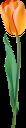 тюльпан, цветок тюльпана, весенние цветы, цветы, флора, tulip, tulip flower, spring flowers, flowers, tulpe, tulpenblume, frühlingsblumen, blumen, tulipe, fleur de tulipe, fleurs de printemps, fleurs, flore, tulipán, flor de tulipán, flores de primavera, tulipano, fiore di tulipano, fiori primaverili, fiori, tulipa, flor tulipa, flores da primavera, flores, flora, квітка тюльпана, весняні квіти, квіти