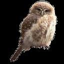 совенок, сова, филин, птица, eule, uhu, vogel, hibou, aigle, oiseau, búho, búho real, ave, civetta, gufo reale, uccello, coruja, águia, pássaro