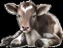 фауна, животные, парнокопытные, теленок, бычок, animals, cloven-hoofed, calf, bull, tiere, paarhufig, kalb, stier, faune, animaux, artiodactyles, veau, taureau, animales, de pezuña hendida, becerro, animali, ungulati, polpaccio, toro, fauna, animais, biungulados de caça, vitela, touro