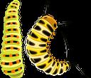 гусеница, сороконожка, насекомые, фауна, caterpillar, centipede, insects, raupe, tausendfüßler, insekten, chenille, mille-pattes, insectes, faune, oruga, ciempiés, insectos, bruco, millepiedi, insetti, lagarta, centopéia, insetos, fauna, гусінь, сороконіжка, комахи
