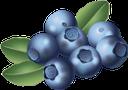 черника, синяя ягода, ягода черники, синий, blue berries, blueberries, blue, blaubeeren, blau, baies bleues, bleuets, bleu, bayas azules, arándanos, bacche blu, mirtilli, blu, bagas azuis, mirtilos, azul, чорниця, синя ягода, ягода чорниці, синій