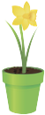 вазон, цветочный горшок, цветок нарцисс, flower pot, flower daffodil, blumentopf, blumen narzisse, vase, pot de fleur, fleur jonquille, florero, maceta, flor del narciso, vaso di fiori, narciso fiore, vaso, vaso de flores, narciso flor