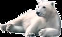 фауна, животные, белый медведь, animals, polar bear, tiere, eisbär, faune, animaux, ours polaire, animales, oso polar, animali, orso polare, fauna, animais, urso polar