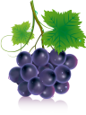 виноград, гроздь винограда, винная ягода, виноделие, синий виноград, grapes, bunch of grapes, wine berry, winemaking, blue grapes, trauben, weintraube, weinbeere, weinbereitung, blaue trauben, raisins, grappe de raisin, baie de vin, vinification, raisins bleus, racimo de uvas, bayas de vino, vinificación, uvas azules, uva, grappolo d'uva, bacca di vino, vinificazione, uva blu, uvas, cacho de uvas, vinho berry, vinificação, uvas azuis, гроно винограду, винна ягода, виноробство, синій виноград