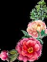 цветы, акварельные цветы, флористика, флора, flowers, watercolor flowers, floristics, blumen, aquarellblumen, floristik, fleurs, aquarelles fleurs, floristique, flore, flores de acuarela, fiori, fiori ad acquerelli, floristica, flores, flores em aquarela, florística, flora, квіти, акварельні квіти