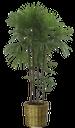 пальма, пальмовое дерево, тропическое дерево, зеленое растение, тропическое растение, комнатное растение, palm tree, tropical tree, green plant, tropical plant, vase, houseplant, palme, tropischer baum, grüne pflanze, tropische pflanze, blumentopf, zimmerpflanze, paume, palmier, arbre tropical, plante verte, plante tropicale, pot de fleurs, plantes d'intérieur, palmera, árbol tropical, las plantas verdes, plantas tropicales, maceta, planta de interior, albero tropicale, pianta verde, pianta tropicale, vaso di fiori, pianta d'appartamento, palma, palmeira, árvore tropical, planta verde, planta tropical, flowerpot, planta de casa, пальмове дерево, тропічне дерево, зелена рослина, тропічна рослина, вазон, кімнатна рослина