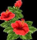 гибискус, цветок гибискуса, китайская роза, гибискус травянистый, красный цветок, цветы, флора, hibiscus flower, chinese rose, grass hibiscus, red flower, flowers, hibiskus, hibiskusblüte, chinesische rose, grashibiskus, rote blume, blumen, hibiscus, fleur d'hibiscus, rose chinoise, hibiscus herbe, fleur rouge, fleurs, flore, rosa china, hibisco de hierba, flor roja, ibisco, fiore di ibisco, rosa cinese, erba di ibisco, fiore rosso, fiori, hibisco, flor de hibisco, rosa chinesa, hibisco de grama, flor vermelha, flores, flora, гібіскус, квітка гібіскуса, китайська троянда, гібіскус трав'янистий, червона квітка, квіти