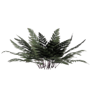 листья папоротника, папоротник, зеленый папоротник, куст папоротника, природа, трава, зеленое растение, fern, green fern, bush fern, grass, green plant, farne, grüne farne, farn busch, natur, gras, grünpflanze, fougères, fougères vert, fougère buisson, nature, herbe, plante verte, helechos, helechos verdes, helecho arbusto, naturaleza, hierba, felci, felci verdi, felce cespuglio, natura, erba, pianta verde, samambaias, samambaias verdes, arbusto samambaia, natureza, grama, planta verde