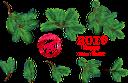 новогоднее украшение, ветка ёлки, новый год, рождество, christmas decoration, christmas tree branch, new year, christmas, weihnachtsdekoration, weihnachtsbaumast, neues jahr, weihnachten, décoration de noël, branche d'arbre de noël, nouvel an, noël, decoración navideña, rama de árbol de navidad, año nuevo, navidad., decorazione natalizia, ramo di albero di natale, anno nuovo, natale, decoração de natal, galho de árvore de natal, ano novo, natal, новорічна прикраса, гілка ялинки, новий рік, різдво