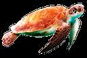 черепаха, морская черепаха, turtle, sea turtle, schildkröte, meeresschildkröte, tortue, tortue de mer, tortuga, tortugas marinas, tartaruga marina, tartaruga, tartaruga de mar
