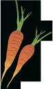морковь, корнеплод, морковный цвет, root, carrot, wurzel, karotte, racine, carotte, raíz, zanahoria, radice, carota, raiz, cenoura, морква, коренеплід, морквяний колір