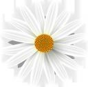 ромашка, цветок ромашки, полевые цветы, цветы, флора, daisy, daisy flower, wildflowers, flowers, gänseblümchen, gänseblümchenblume, wildblumen, blumen, marguerite, fleur de marguerite, fleurs sauvages, fleurs, flore, margarita, flor de margarita, margherita, fiore margherita, fiori di campo, fiori, margarida, margarida flor, flores silvestres, flores, flora, квітка ромашки, польові квіти, квіти
