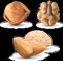 грецкий орех, фундук, миндаль, орехи, walnut, hazelnuts, almonds, nuts, walnuss, haselnüsse, mandeln, nüsse, noisettes, amandes, noix, avellanas, almendras, nueces, noce, nocciole, mandorle, noci, noz, avelãs, amêndoas, nozes, волоський горіх, мигдаль, горіхи