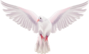голубь, белый голубь, голубь мира, белая птица, отряд пернатых, пернатые, птицы, dove, white dove, dove of peace, white bird, squad of birds, birds, taube, weiße taube, friedenstaube, weißer vogel, vogelgruppe, vögel, colombe, colombe blanche, colombe de la paix, oiseau blanc, escouade d'oiseaux, oiseaux, paloma, paloma blanca, paloma de la paz, pájaro blanco, escuadrón de pájaros, pájaros, colomba, colomba bianca, colomba della pace, uccello bianco, squadra di uccelli, uccelli, pomba, pomba branca, pomba da paz, pássaro branco, esquadrão de pássaros, pássaros, голуб, білий голуб, голуб миру, білий птах, загін пернатих, пернаті, птиці
