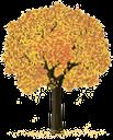 дерево, желтый лист, зеленое растение, осень, флора, золотая осень, tree, green plant, baum, grüne pflanze, arbre, plante verte, flore, árbol, albero, pianta verde, árvore, planta verde, flora, зелена рослина
