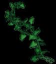 вьющийся зеленый плющ, вечнозеленая лиана, зеленый лист плюща, зеленое растение, curly green ivy, evergreen vine, green ivy leaf, green plant, geschweiften grünen efeu, immergrüne reben, grün efeu blatt, grüne pflanze, lierre bouclés vert, vigne à feuilles persistantes, vert feuille de lierre, plante verte, hiedra verde rizado, vid de hoja perenne, de hojas de hiedra verde, riccio verde edera, vite sempreverde, foglia di edera verde, pianta verde, ivy encaracolado verde, videira evergreen, folha verde hera, planta verde