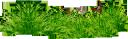 зеленая трава, лужайка, трава, природа, бабочка, green grass, lawn, grass, butterfly, grüne gras, rasen, gras, natur, schmetterling, herbe verte, pelouse, herbe, nature, papillon, verde hierba, césped, hierba, naturaleza, mariposa, verde erba, prato, erba, natura, farfalla, grama verde, relvado, grama, natureza, borboleta