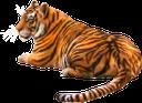 фауна, животные, кошачьи, тигр, cat, tier, katze, tiger, faune, chat, animale, gatto, fauna, animal, gato, tigre