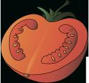 помидор, половинка помидора, томаты, красный, half tomato, tomato, red, halbe tomate, rot, moitié tomate, rouge, medio tomate, rojo, mezzo pomodoro, pomodoro, rosso, meio tomate, tomate, vermelho, помідор, половинка помідора, томати, червоний