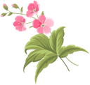 цветы, розовый цветок, flowers, pink flower, spring, blumen, rosa blumen, frühling, fleurs, fleur rose, le printemps, flores de color rosa, fiori, fiore rosa, la primavera, flores, flor rosa, primavera, квіти, рожева квітка, весна